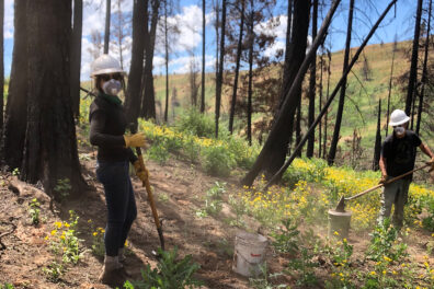 Researchers collect soil samples in a forest