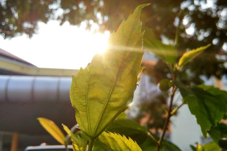 The sun illuminates a single plant next to a building