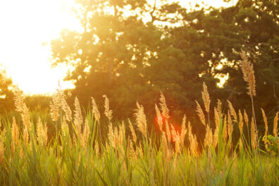 The sun shines upon a grassy field in the countryside.