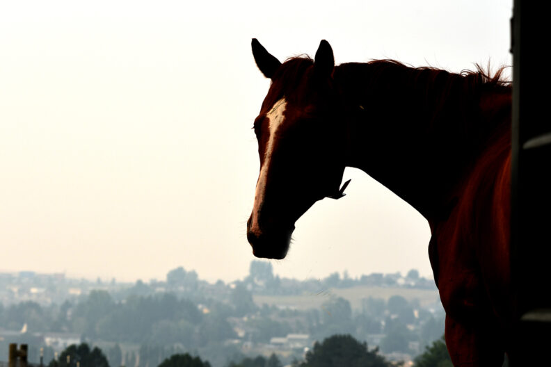 A horse looks out at a smoke filled sky.