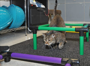 Alice navigates an obstacle course.