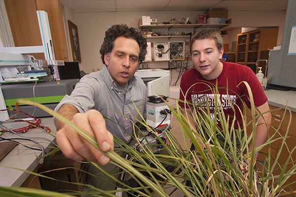 A photo of a man inspecting a plant's leaves with a student