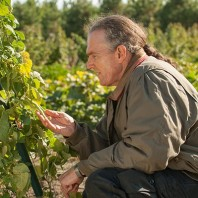 A photo of John Reganold inspecting plants