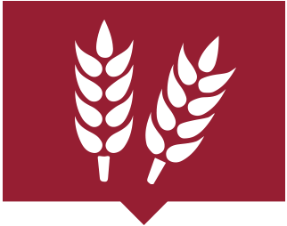 Statewide-Wheat