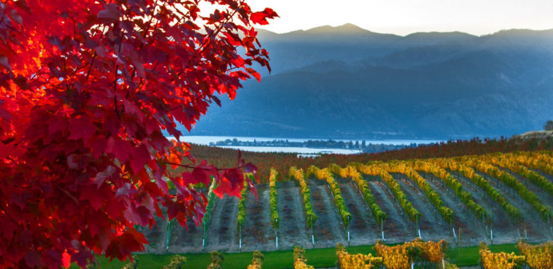 NW wine country landscape in the fall