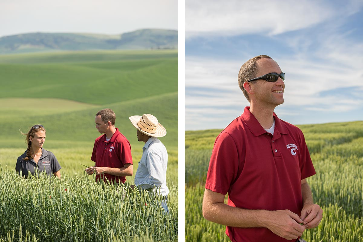 Carter in wheat fields