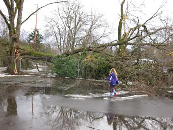 broken tree in park after storm