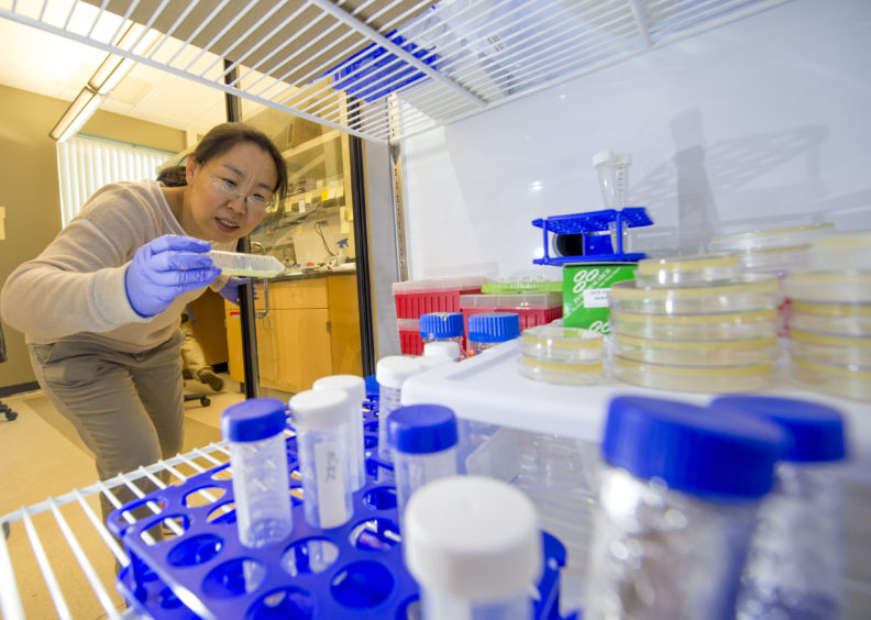 Dr. Jingru Sun checks on a sample in her research lab.