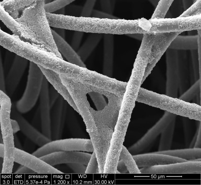 Electrochemically-active bacteria growing on a graphite felt electrode
