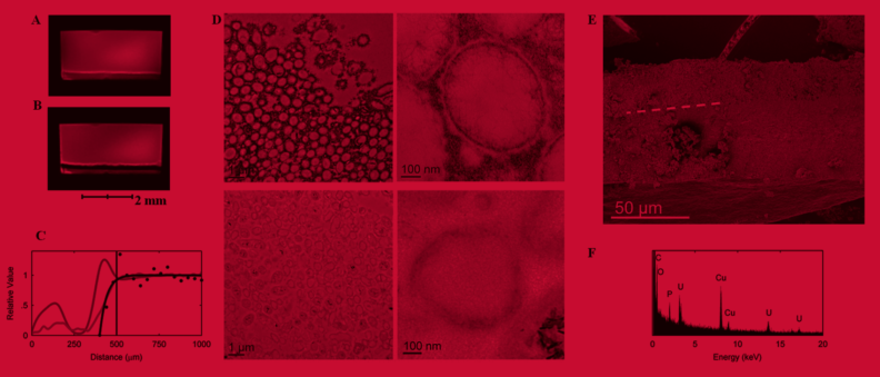 Figure from paper on biofilm research showing microscopic images of biofilms and graphs