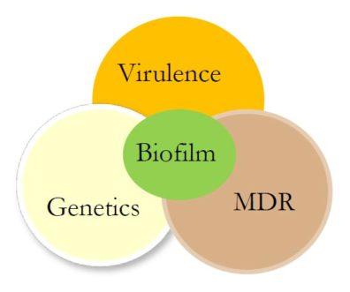 Venn diagram (Outside circles: Virulence, Genetics, MDR - overlapping; Center circle: Biofilm)