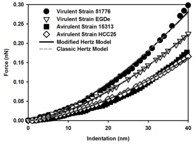 Graph with the indentation of virulent strains 51776 and EGDe, avirulent strains 15313 and HCC25, modified Hertz model, classic Hertz model