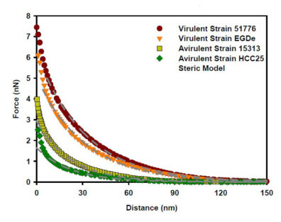 graph showing distance and corresponding force for virulent strains 51776 and EGDe, avirulent strains 15313 and HCC25, and Steric model