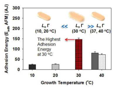 Graph showing adhesion energy for growth temperatures - the highest adhesion energy at 30 degrees C