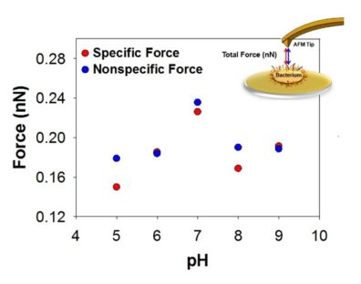Graph showing specific and nonspecific Force as it corresponds to pH