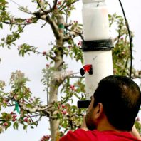 Student spraying fruit trees with cellulose nanocrystals