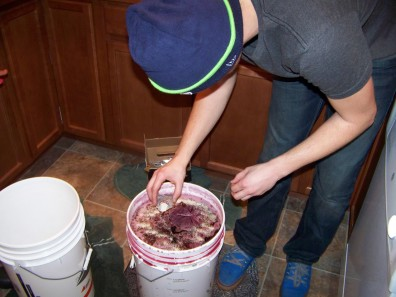 Adding the yeast to the wine must.