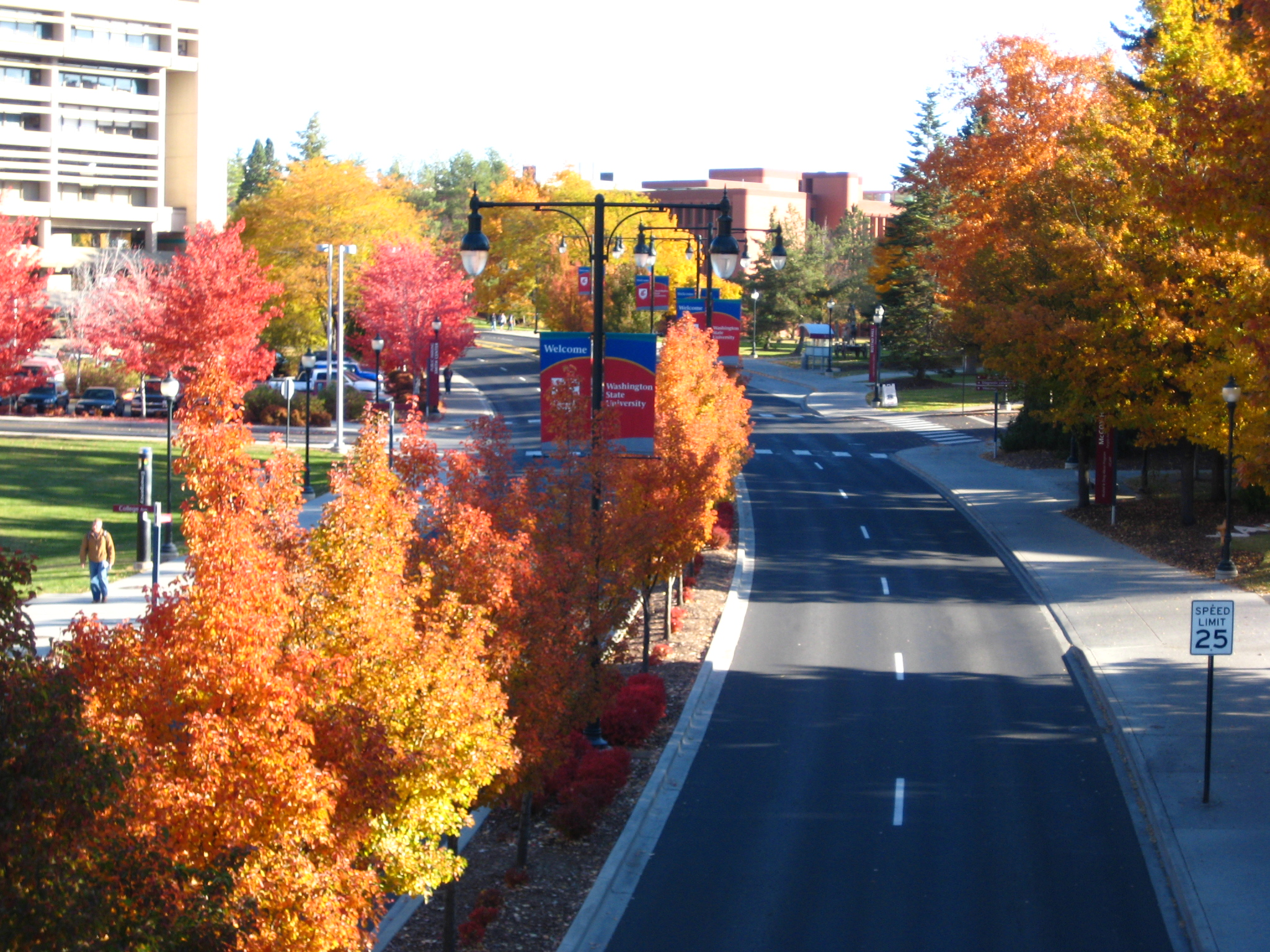 Fall color in Pullman