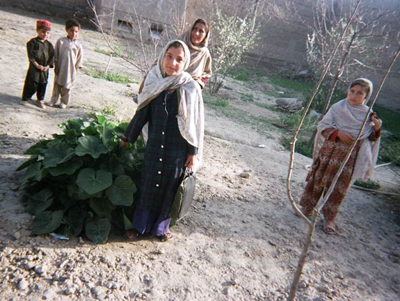 Local children in Laghman stand beside some sprouting greens