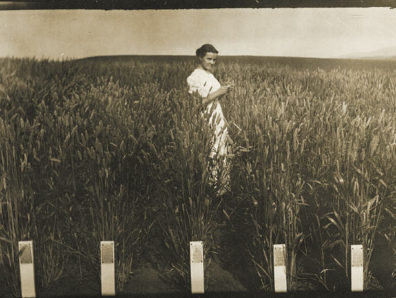 Xerpha Gaines visits her husband Edward's variety test plots on Washington State College's campus in 1912.