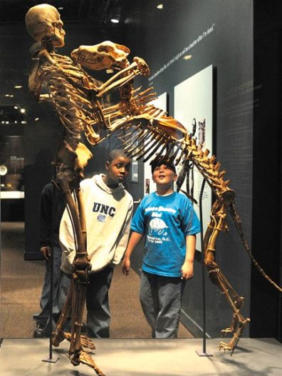 The skeletons of Krantz and Clyde mounted for the Smithsonian's exhibition. Linda Davidson/THE WASHINGTON POST