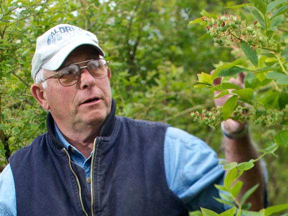 Glenn Aldrich in blueberry field