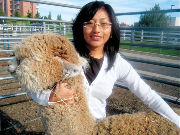 Yessenia Picha with an alpaca at WSU