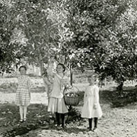 Old Clarkston apple orchard