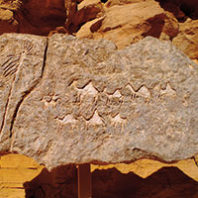Prehistoric rock art depicting Nabataen trading caravan—eighteenth century B.C.E. Photo Avi Horovitz