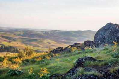 Palouse landscape. Photo courtesy maryjanesfarm.org
