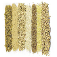 Ancient grains freekeh, amaranth, barley, quinoa, bulgur, millet, and farro. Courtesy Pioneer Press