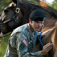 A veterinarian to the corps