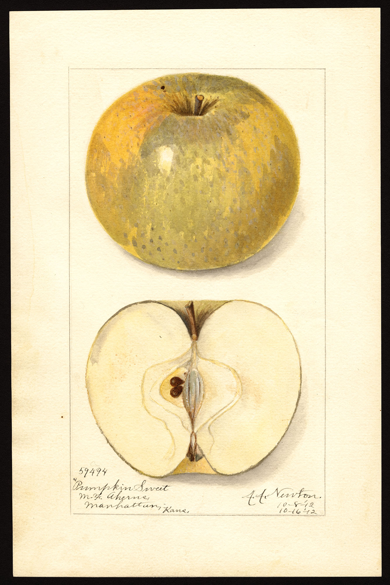 Gallery Old Time Apple Varieties In The Northwest