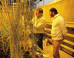 WSU Senior Scientific Assistant Steve Lyon (left) explains wheat hybridization to Chad Robertson, owner of Tartine Bakery, San Francisco. (Photo Kim Binczewski)