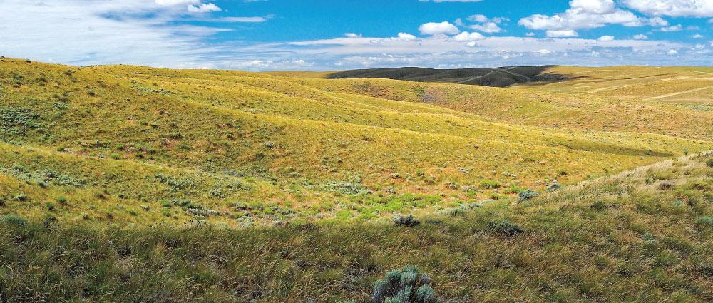 Kahlotus Prairie