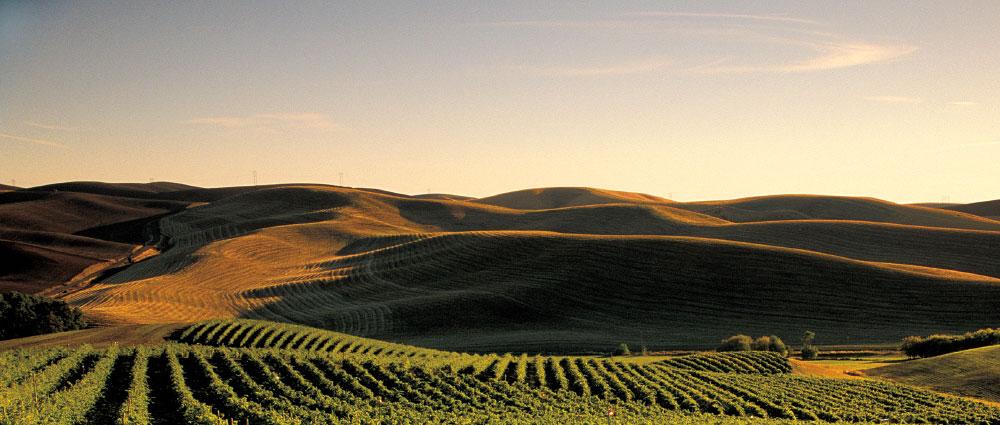 Walla Walla fields