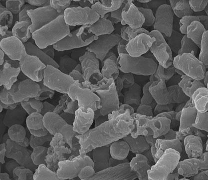 E. coli death