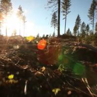felled forest scene