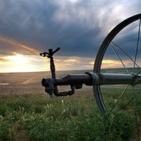 Columbia Basin irrigation. Photo Zach Mazur