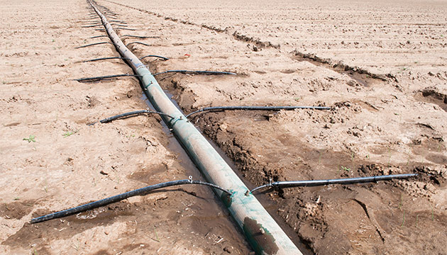 A drip irrigated field. Photo Zach Mazur