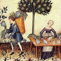 """Pori"", or Leeks, Tucuinum sanitatis, 1380s, National Library of Vienna"