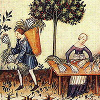 """Pori"", or Leeks, Tucuinum sanitatis, 1380s, National Library of Vienna"