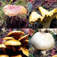 Mushroom gallery
