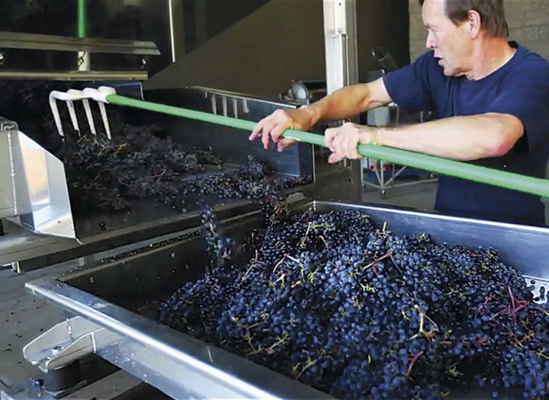Richard Larsen moving grapes