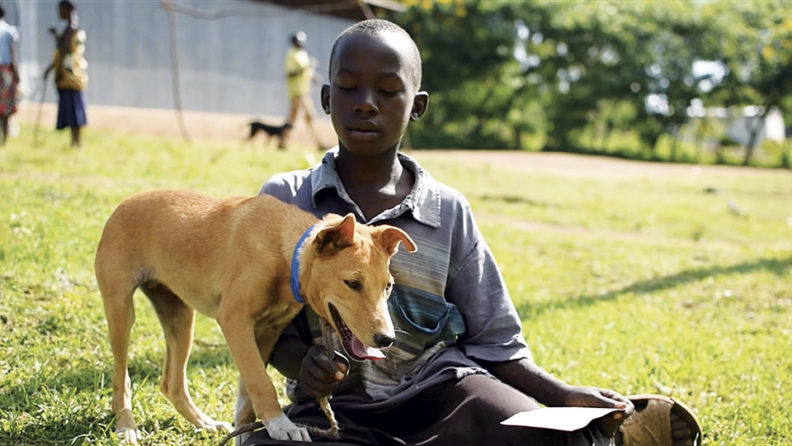 Tanzanian boy with vaccinated dog