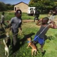 rabies 360 video