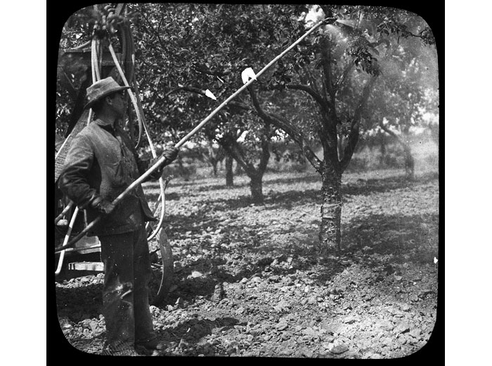 Spraying Fruit Trees, 1932
