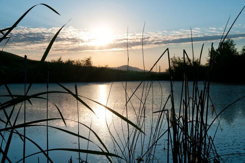 Wetlands at Palouse Ridge