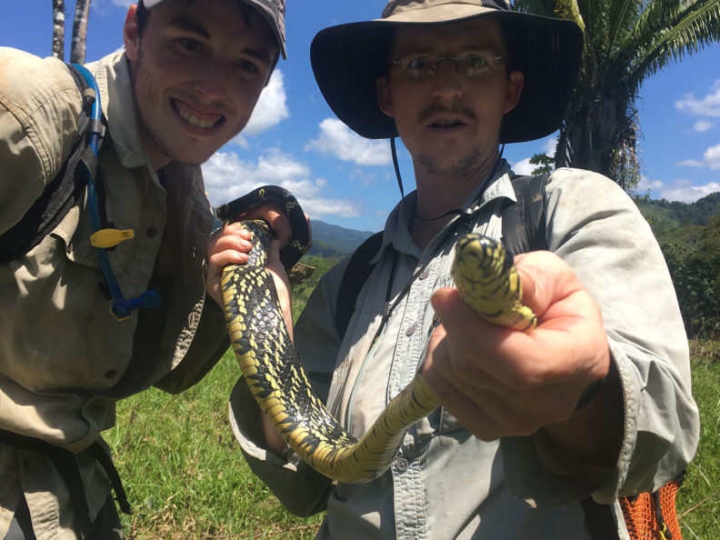 Biologist holds a fer-de-lance viper