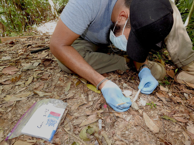 Gathering feces in Honduras